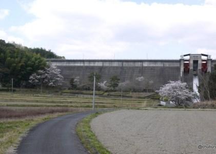 今富ダムの桜を見てきた。