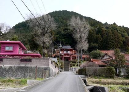 長門市指定天然記念物のシイノキ巨樹群