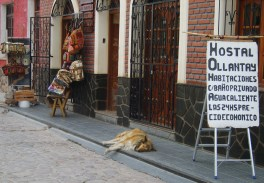No tan guardián... (Humahuaca, veromendo 2014)