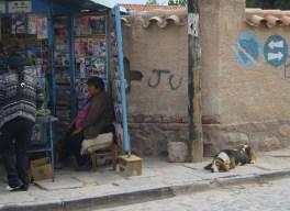 "El famoso perro ""batata"" (Humahuaca, veromendo 2014)"