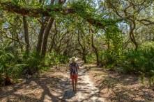 Hiking the roads on Cumberland Island