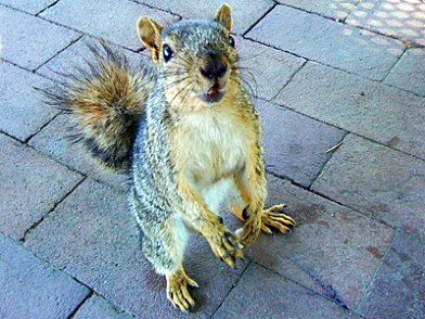 esquilo-freak