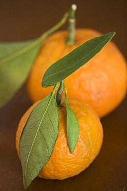 citrus-clementines