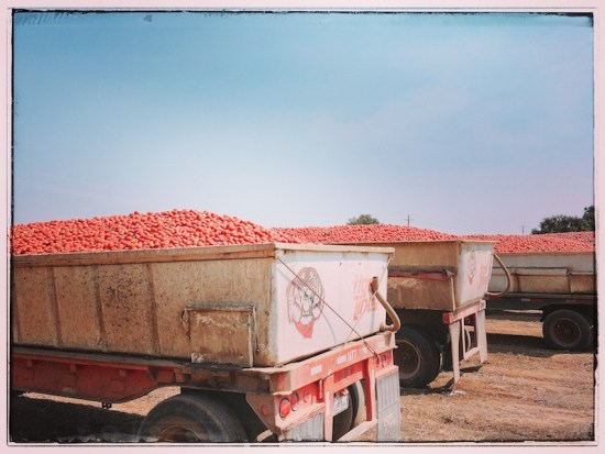 got-tomatoes