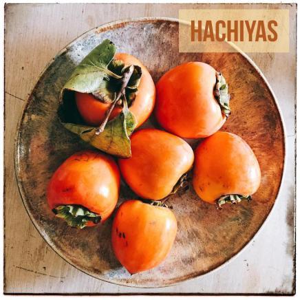 hachyas