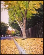 fall16_05