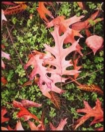 fall16_06