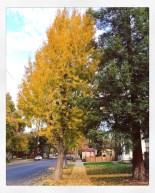 fall16_08