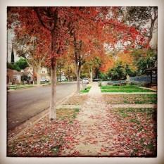 fall16_19