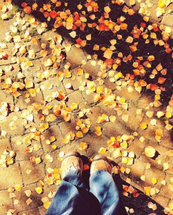 fall16_24