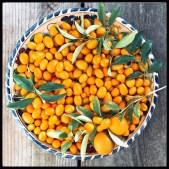 foraged_kumquats