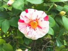 spring17_01