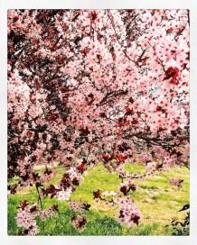 spring17_08