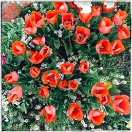 spring17_15