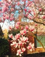 spring17_19