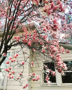 spring17_21