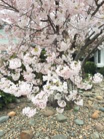 spring17_31