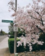 spring17_35