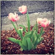 spring17_36