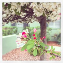 spring17_39