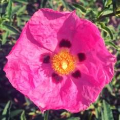 paper-flower