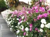 more_spring17_20