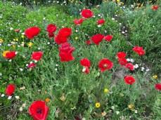 more_spring17_39