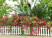roses-gate