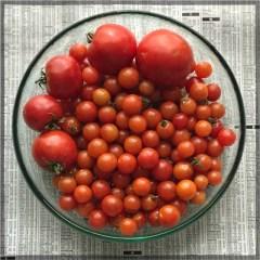 tomatos17_04