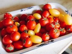 tomatos17_26