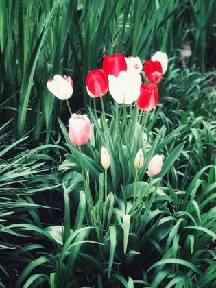 spring19-5