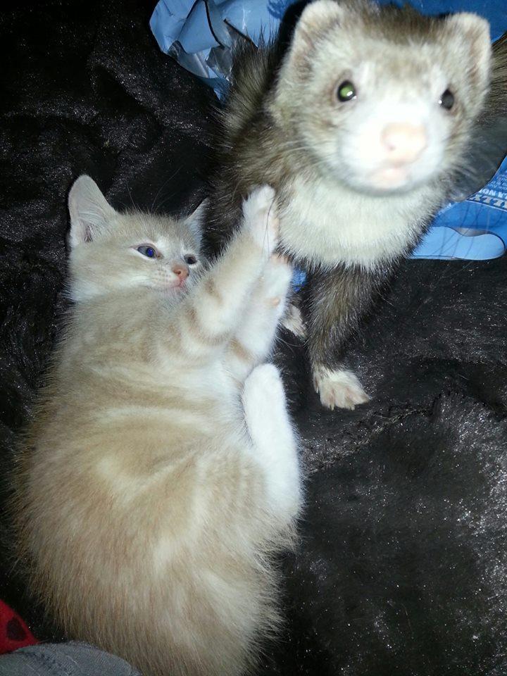 kitten21