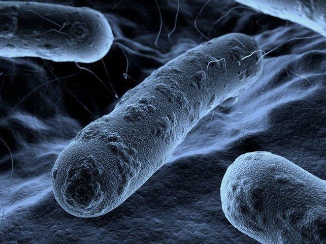 1373590818_sozdan-lazernyy-sensor2c-sposobnyy-obnaruzhivat-bakterii-za-neskolko-minut-2