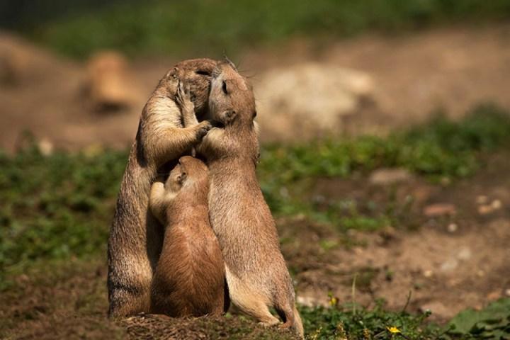 6104760-R3L8T8D-900-cute-kissing-animals-love-4__880
