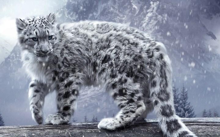 Snow-Leopard-934x