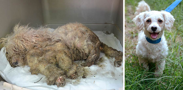 dog-makeover-before-after-rescue-15