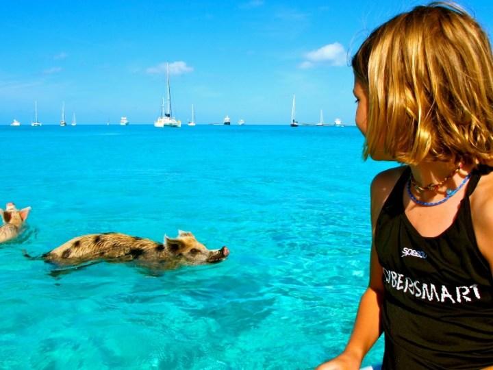Свиньи в воде-10