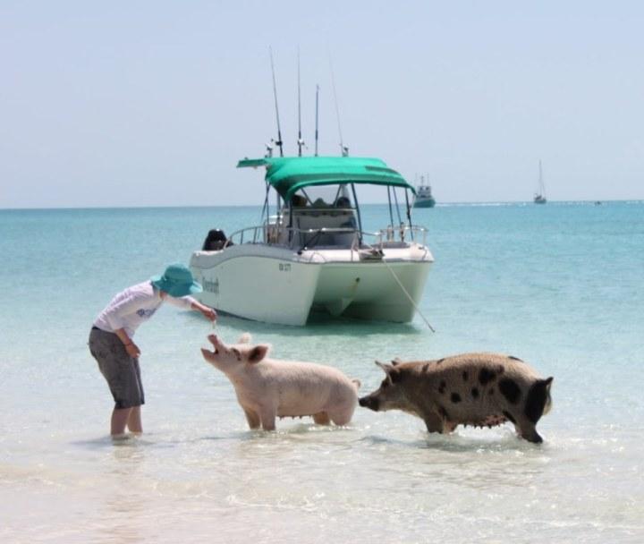 Свиньи в воде-17
