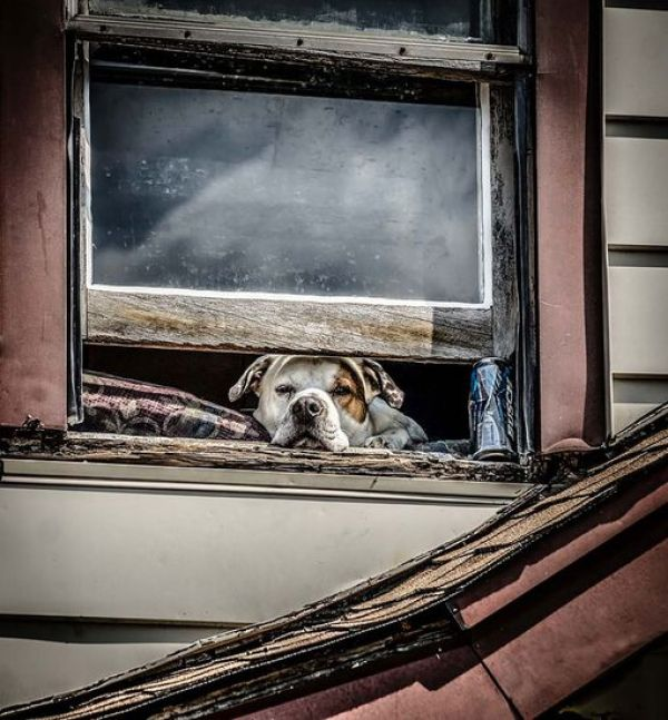 animals-looking-through-the-window-11_result