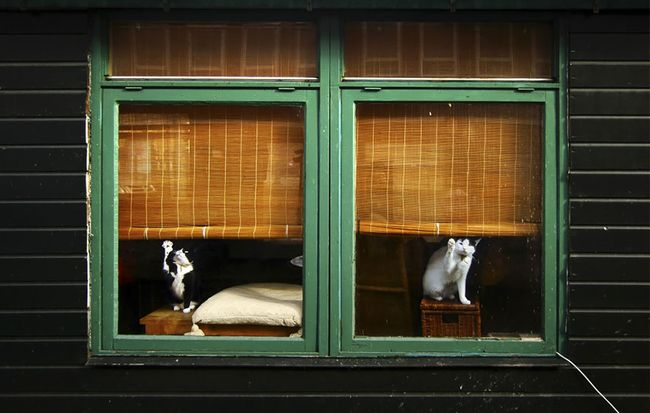 animals-looking-through-the-window-13_result