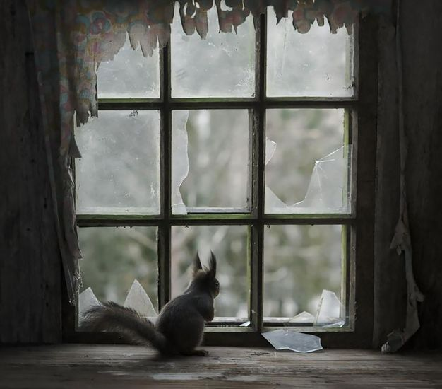 animals-looking-through-the-window-1_result