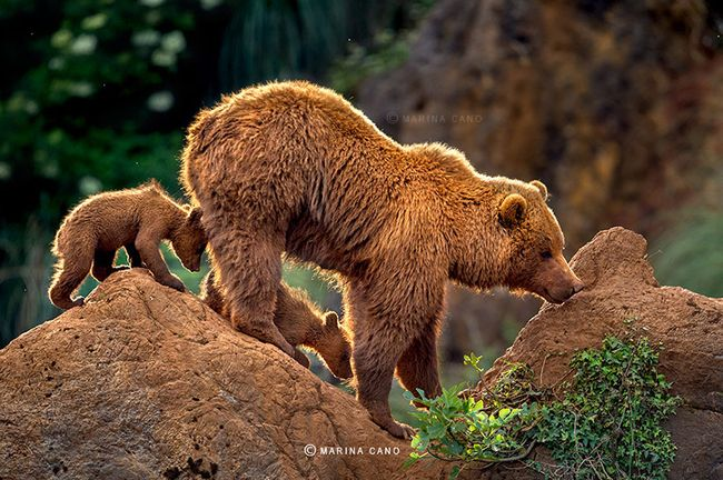 bear-photography-202_result