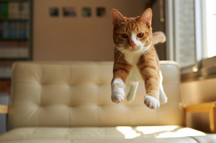 funny-jumping-cats-71__880