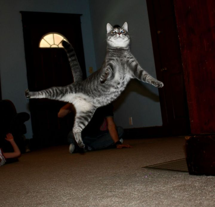 funny-jumping-cats-911__880