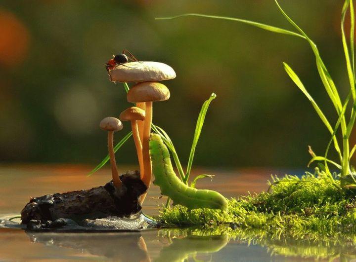 mushroom-photography-vyacheslav-mishchenko-11_result