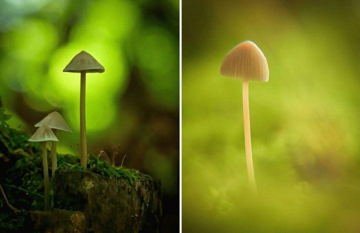 mushroom-photography-vyacheslav-mishchenko-18_result