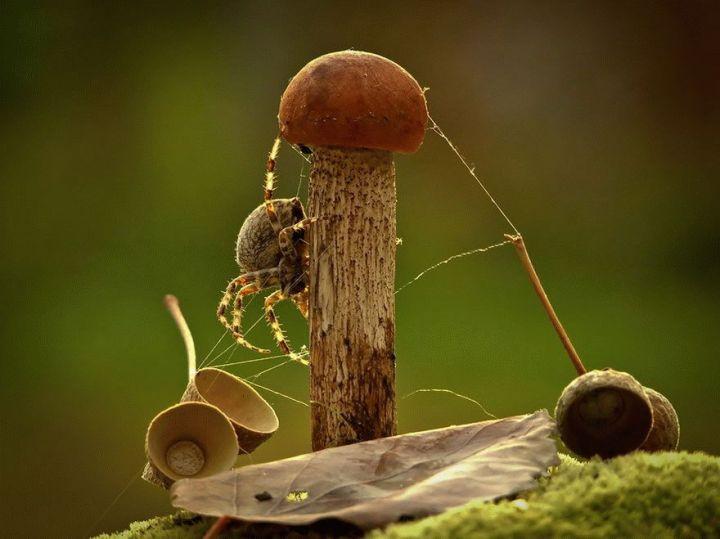 mushroom-photography-vyacheslav-mishchenko-31_result