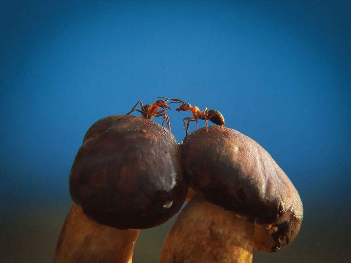 mushroom-photography-vyacheslav-mishchenko-35_result