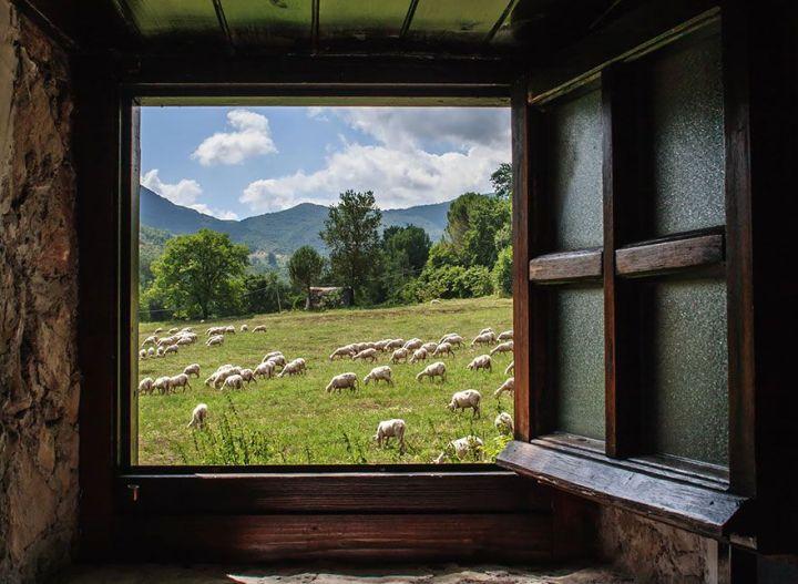 sheep-herds-around-the-world-11_result