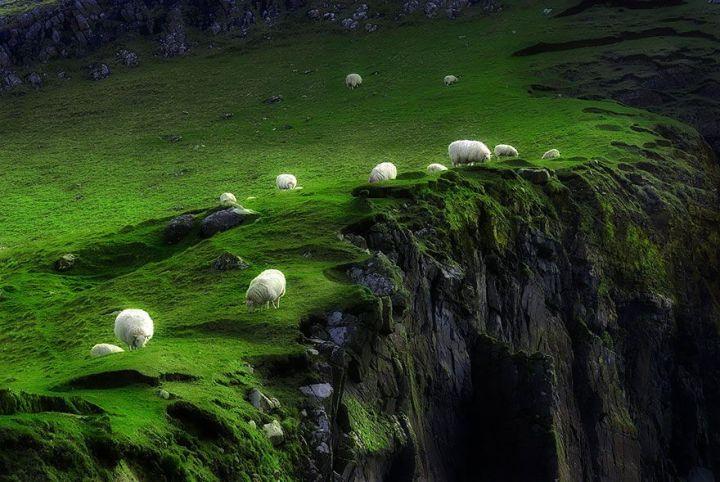 sheep-herds-around-the-world-15_result